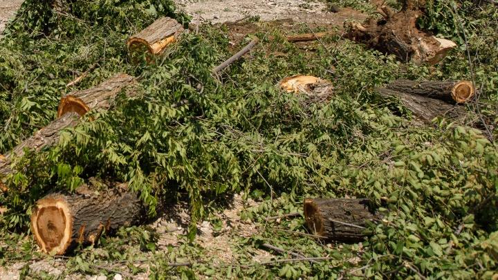 «Дерево чуть не убило мою семью»: волгоградец пытается добиться компенсаций за раздавленную машину