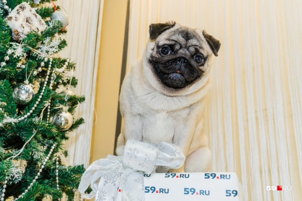 Звезда нашей редакции— пес Купер, которого мы никогда не бросим