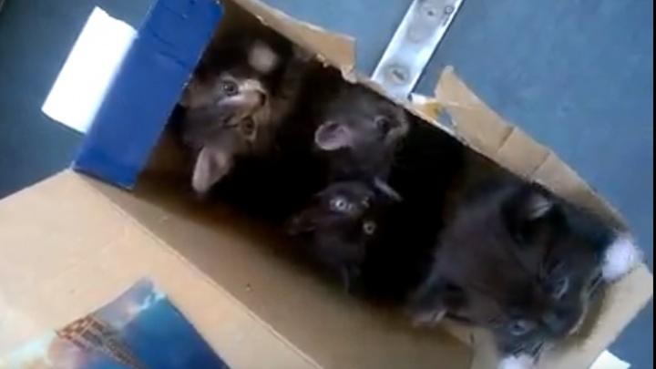 Новосибирец снял милое видео с котятами, из-за которых эвакуировали электричку
