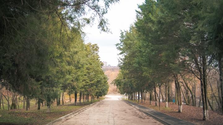 Возле ростовского Ботанического сада нашли мёртвую женщину