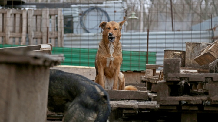 «Суньте ей в пасть какую-нибудь палку!»: появился видеоролик нападения собаки на девочку в Башкирии