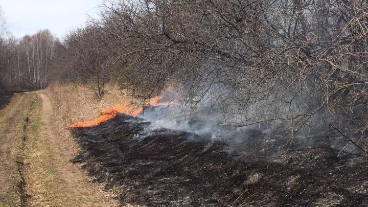 Красноярск обступают лесные пожары. За выходные их площадь стремительно выросла