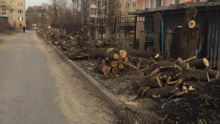 «Жители в недоумении»: рядом с частным детсадом на Сибиряков-Гвардейцев вырубили все деревья