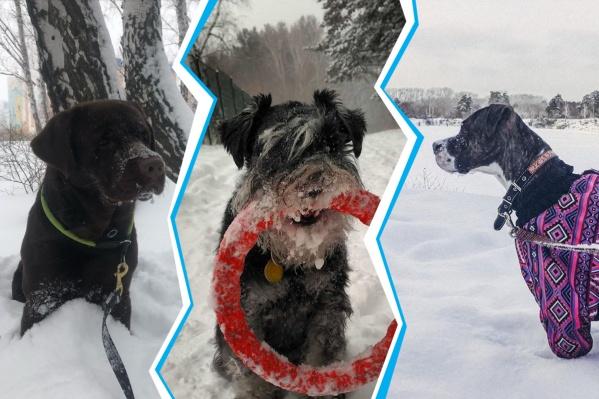 Собаки — вот кто точно против того, чтобы с челябинских улиц убирали сугробы