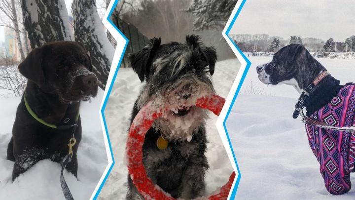 «Добрый хозяин пса из сугроба не вытащит»: смотрим, как собаки радуются снегу в Челябинске