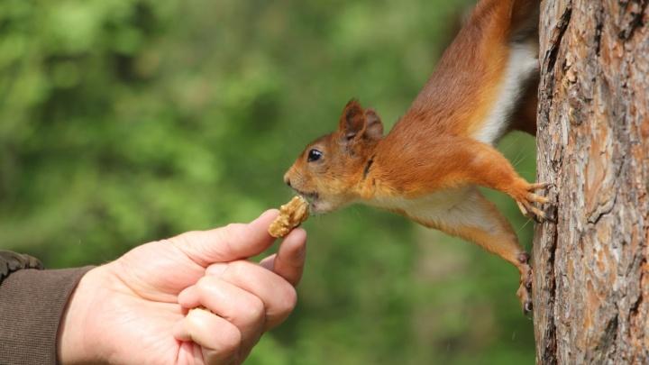 Источник белка или удар по печени: что будет, если объесться орехами