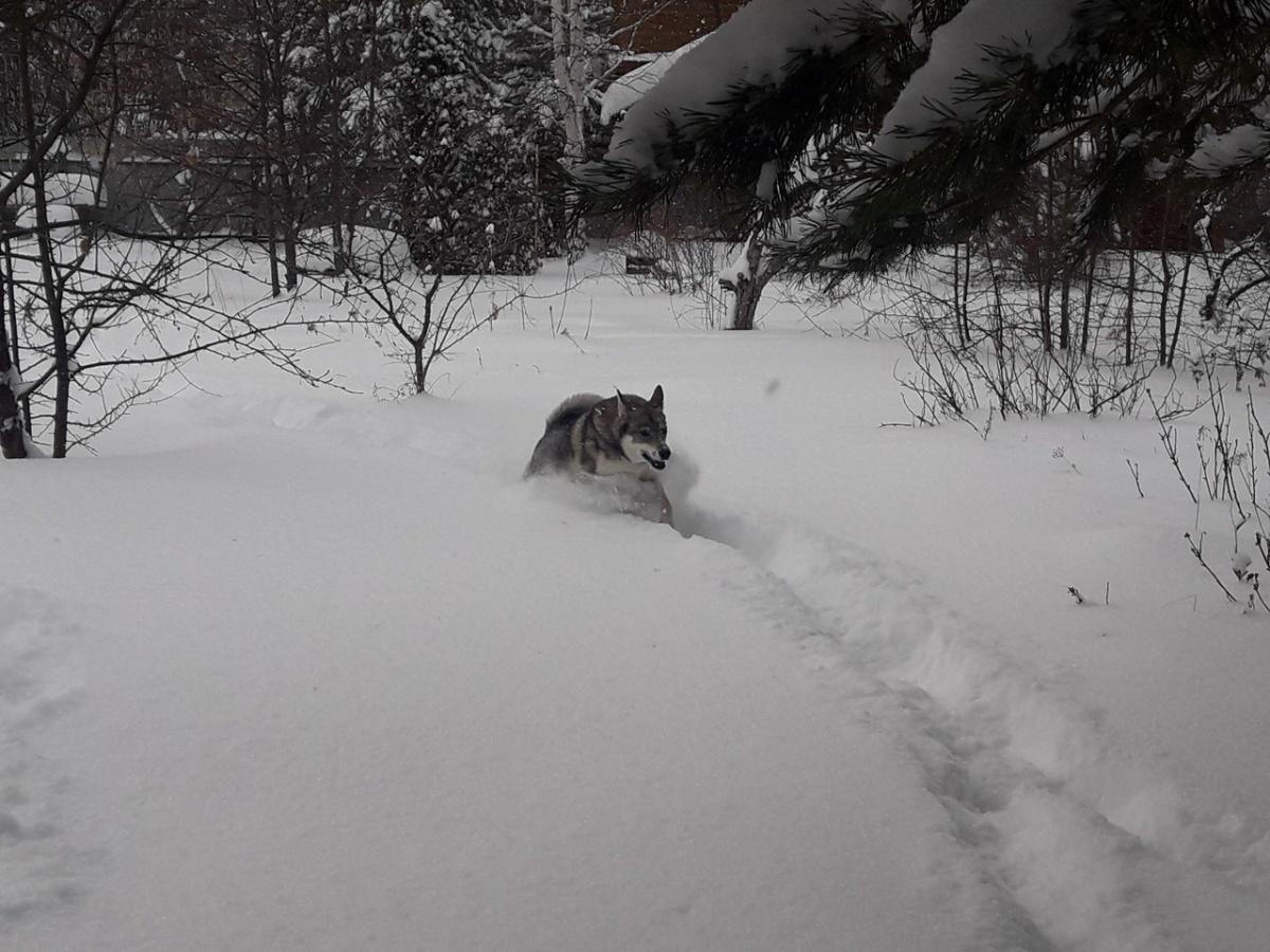 Как тут не вспомнить мем про шерстяного волчару?
