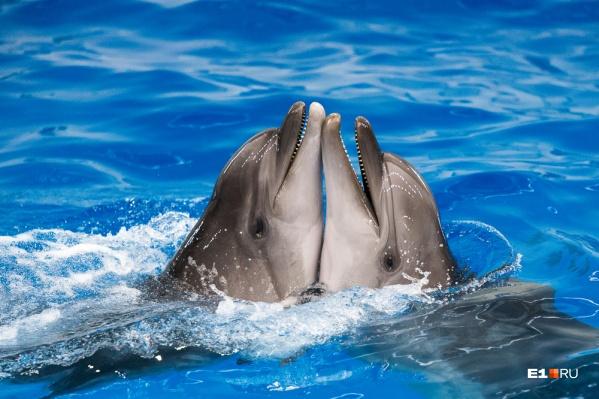 Что может быть милее дельфинообнимашек?