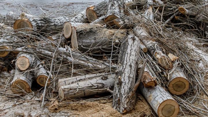 «Разобрали по запчастям»: в Волгограде «обглодали» аллею деревьев на проспекте Жукова