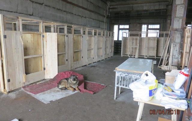 Зоозащитники строят приют на тысячу собак в районе КрасТЭЦ