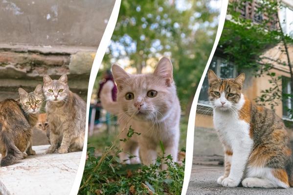 Самару многие называют котической столицей России. А вы согласны с этим?