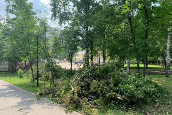 Спиленные деревья лежат на территории Центрального парка