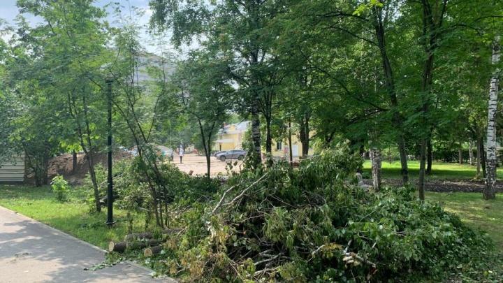 В Центральном парке срубили берёзы — горожане заподозрили, что там застройка