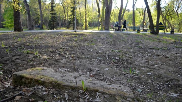 Реконструкцию Зеленой Рощи могут отложить из-за кладбища, которое там раньше находилось