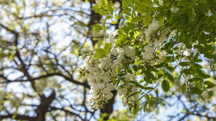 Будет вам весна: к концу майских праздников с Волгоградом распрощаются дожди и грозы