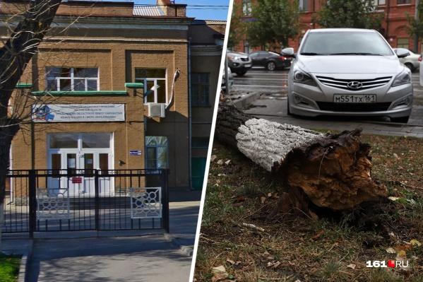 На нескольких студенток педагогического колледжа упало дерево