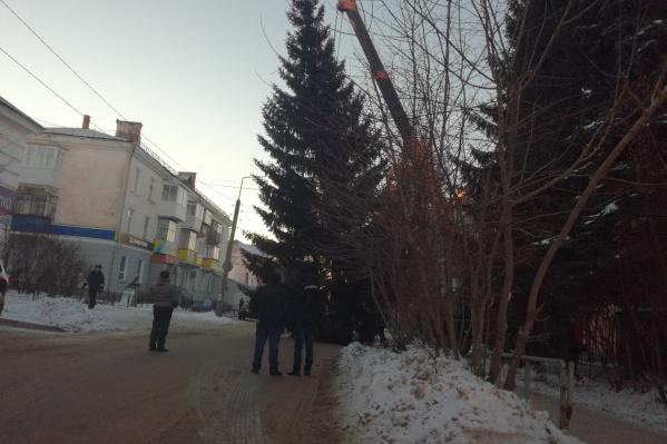Пушистая ель росла всего в квартале от площади Ленина