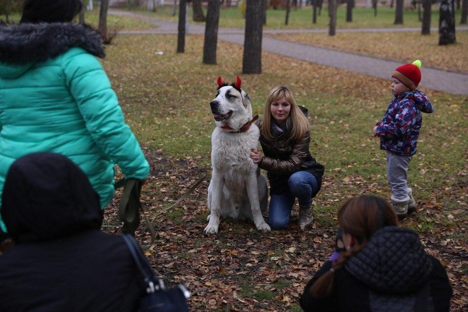 Вырученные деньги пойдут на помощь бездомным животным