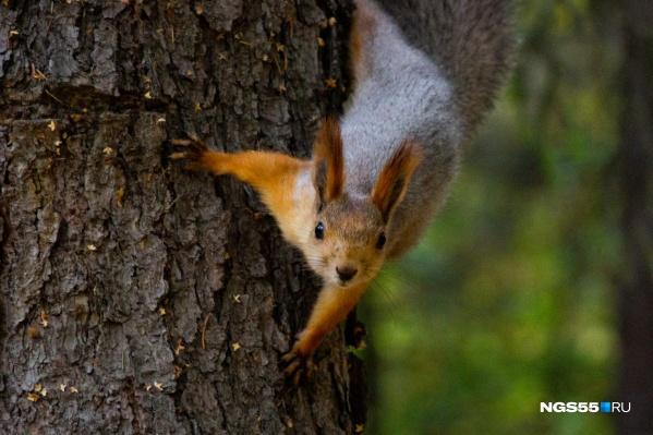 «Здорово! Орехи есть? А если найду?»