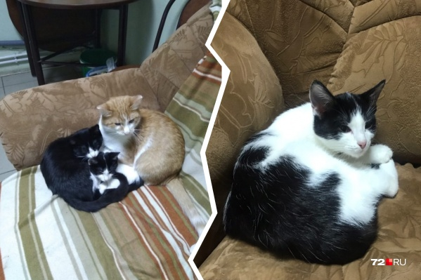 Сейчас брошенные коты вынуждены оставаться в клинике и ждать, когда их заберут домой новые хоязева