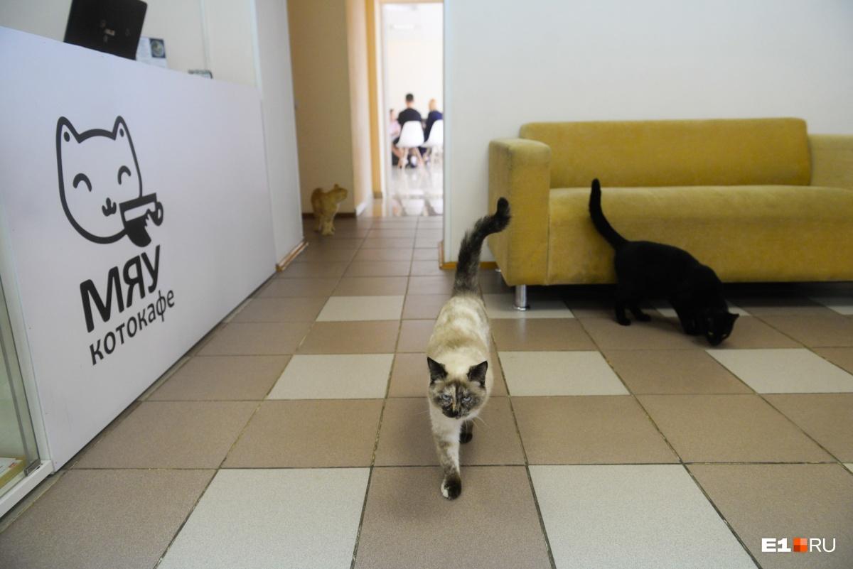 Сейчас в котокафе вместе с Универсиадой живут 14 кошек