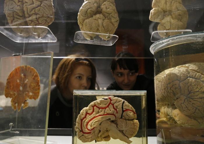 Оказывается, то, что мозг работает всего на 10%, — это миф