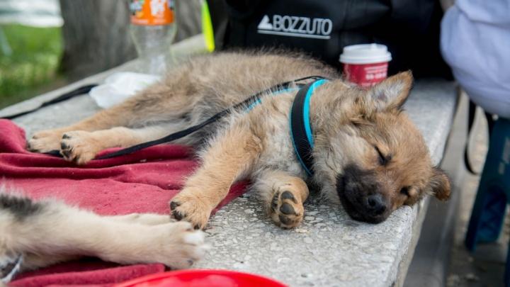Им пора домой: волгоградцев зовут выбрать себе щенка в Комсомольском саду