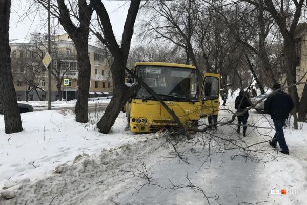 Автобус врезался в дерево и сломал ветки