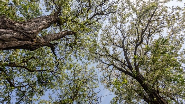 До 10 октября запретили волгоградцам отдыхать на лоне природы