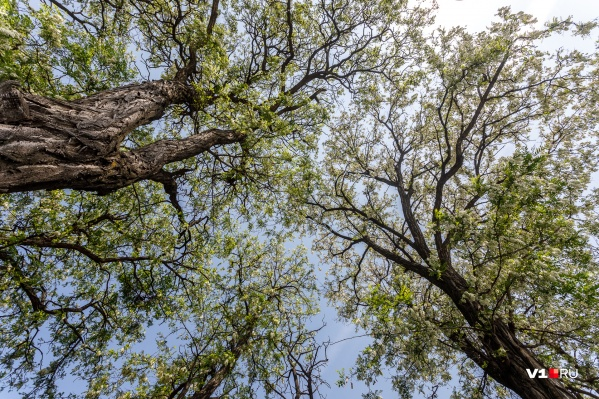 Запретом хотят уберечь волгоградские леса от пожаров