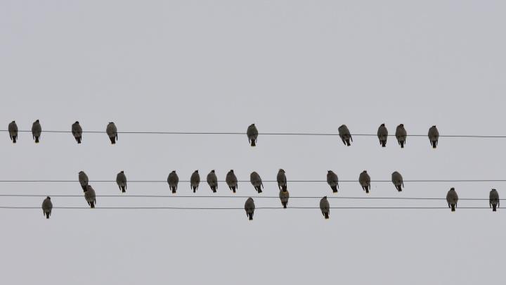 Стаи птиц оккупировали Эльмаш. Орнитолог объяснил почему