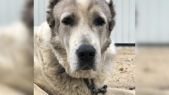 Хозяйка нашла свою собаку спустя пять лет: трогательная история о воссоединении двух друзей