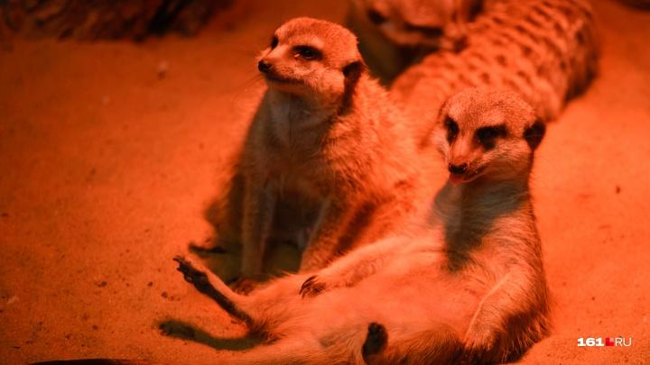 Милые тараканы и кровожадные сурикаты: зима в ростовском зоопарке — 27 крутых кадров