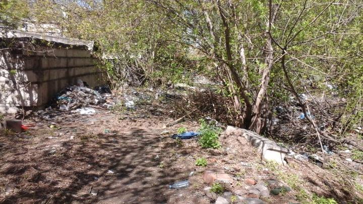 Красноярец готов расчистить свалку ради площадки для выгула собак, но требует обещания от чиновников