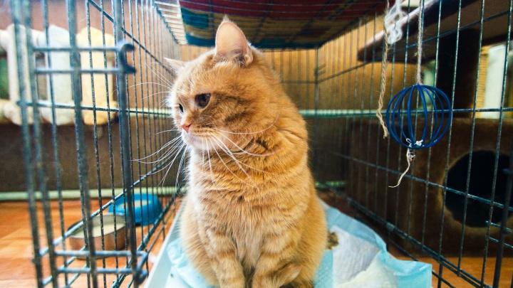 Соседские войны: как одни тюменцы спасают кошек из замурованного подвала, а другие жалуются в УК