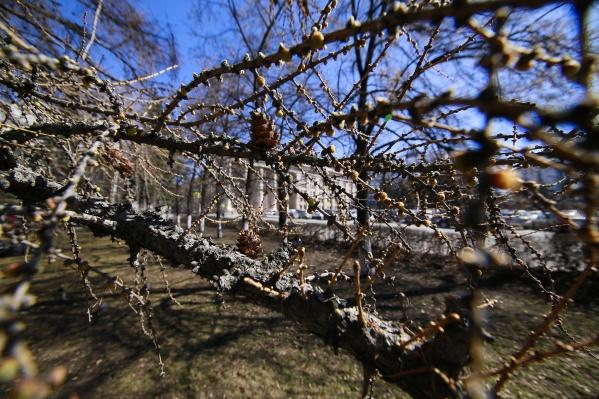 Синоптики полагают, что настоящая весна наступит в Челябинске уже на следующей неделе