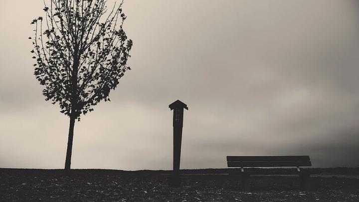 Фотографии новосибирца с деревом и столбом попали на выставки в Греции и Венгрии