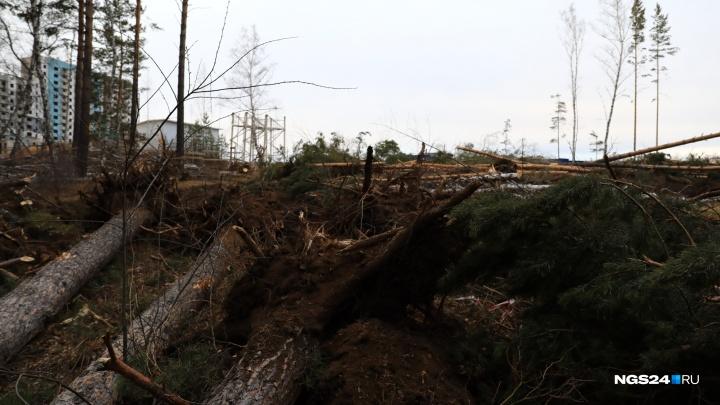 На Стасовой вырубили десятки сосен ради строительства детского сада