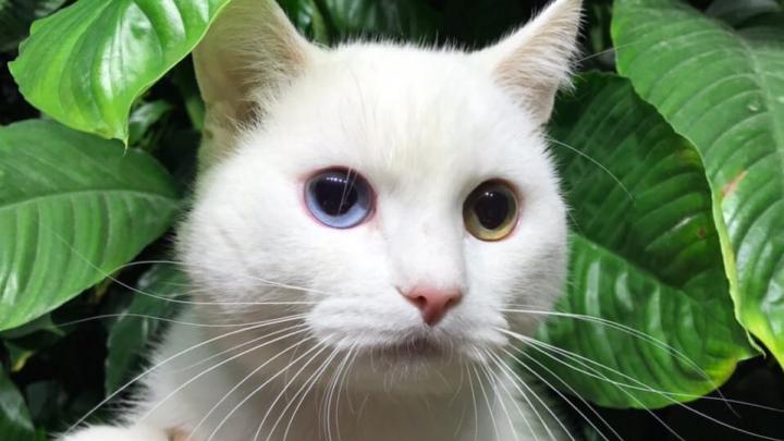 «Какая-то дикость»: в челябинскую ветклинику подбросили кота из-за того, что он чесался