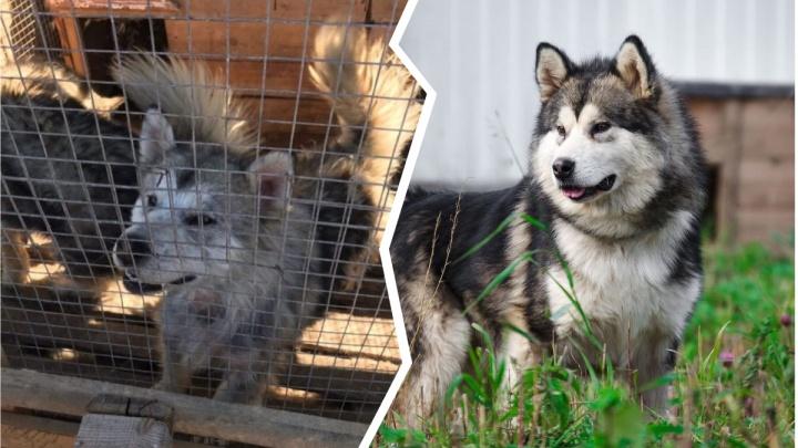 Как они изменились! 15 фотографий собак и кошек до и после приюта