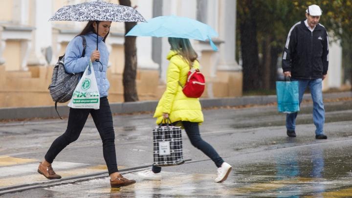 Разведет сырость: Волгоград проведет дождливые и ветреные выходные