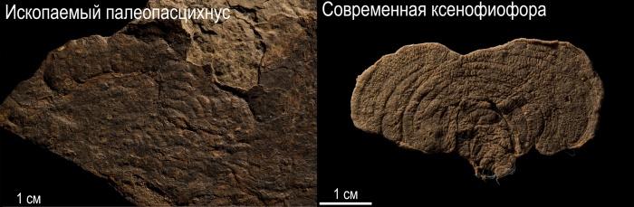 Учёные нашли сходства у древних организмов и современных простейших