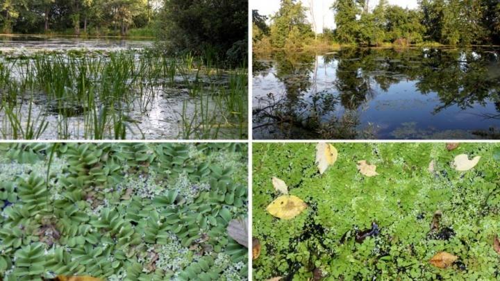 В Башкирии нашли три новых карстовых озера с редким папоротником