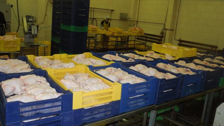 В филе от «Уемской птицефабрики» нашли сальмонеллу. Почему фирме назначили штраф ниже минимального?