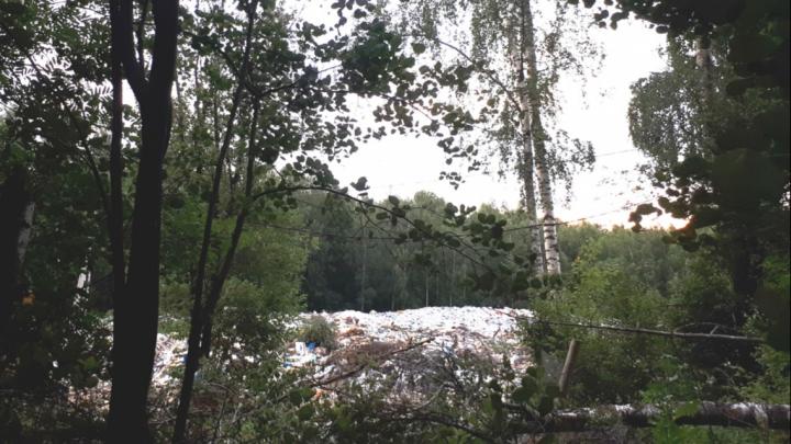 Чиновники ответили на жалобу москвички на мусорным полигон посреди леса в Ярославской области