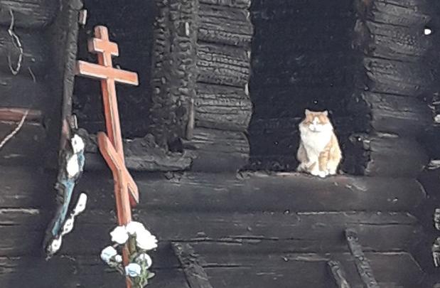 «Лапки уже чёрные»: в Ярославской области кот неделю ждёт погибших хозяев у сгоревшего дома