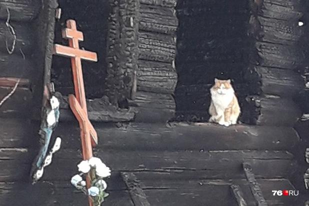 Кот Лисыч ждет своих хоз