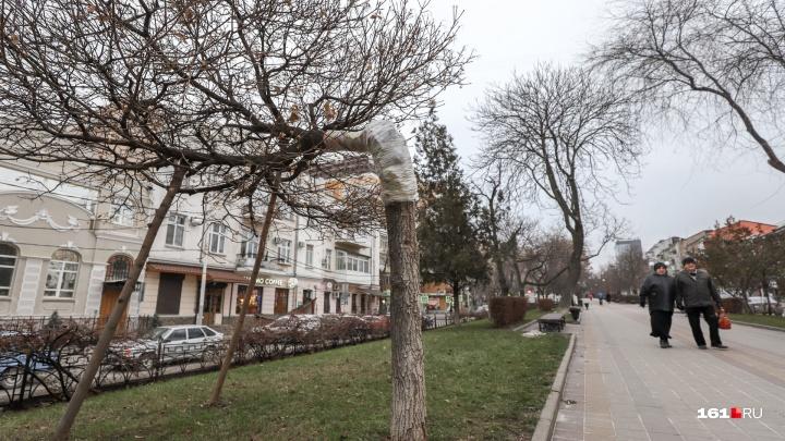 Первый снег и дожди: какая погода ждет ростовчан на этой неделе