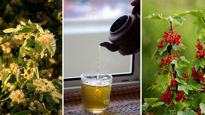Ловим лето в мешок. Семь вкусных и полезных добавок для чая