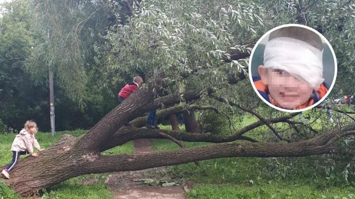 В Перми Следственный комитет начал проверку из-за падения ребенка с поваленного ураганом дерева